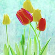 Colorful Spring Tulip Flowers Art Print