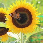 Colorful Sunflower Art Print