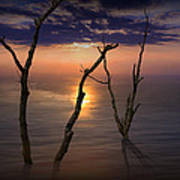 Colorful Sunset Seascape With Tree Trunks Art Print