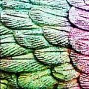Colorful Wings Art Print