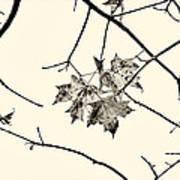 Colorless Autumn Art Print