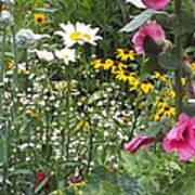 Colors In The Garden Art Print