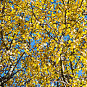 Colors Of Autumn - Yellow - Featured 3 Art Print
