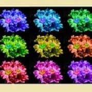 Colors Of Cactuses Art Print