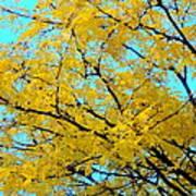 Colors Of Fall 1 Art Print