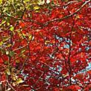 Colors Of Fall 3 Art Print