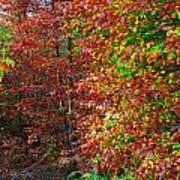 Colors Of Fall 4 Art Print