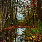 Colors Of Fall Art Print by Kristi Swift