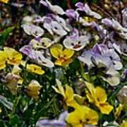 Colors Of Flower  Art Print