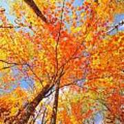 Colors Of Leaves Yellows Oranges 2884 Art Print