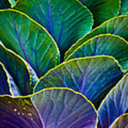 Colors Of The Cabbage Patch Art Print
