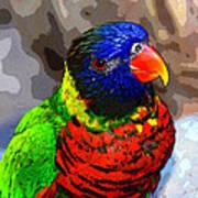 Colors Of The Lorikeet Art Print