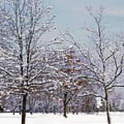 Colors Of Winter Art Print