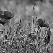 Colour Blind Poppies 2 Art Print