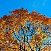 Colourful Autumn Tree Against Blue Sky Art Print