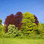 Colourful Trees Art Print