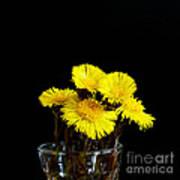 Coltsfoot Bouquet Art Print