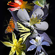 Columbine And Butterfly Collage Art Print