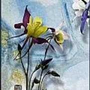 Columbine Blossom With Suminagashi Ink Art Print
