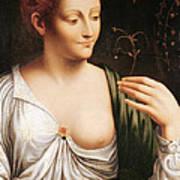 Columbine Art Print by Leonardo da Vinci