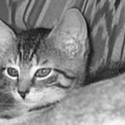 Comfy Kitten Art Print