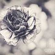 Coming Up In Black And White Art Print