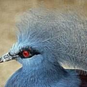 Common Crowned Pigeon Art Print