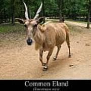 Common Eland Art Print by Chris Flees