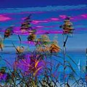 Common Reeds At Sunrise Art Print