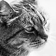 Concentrating Cat Art Print