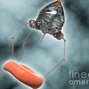 Conceptual Image Of A Nanobot Injecting Art Print