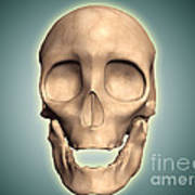 Conceptual Image Of Human Skull, Front Art Print by Stocktrek Images