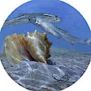 Conch And Ladyfish, 2001 Pair Art Print