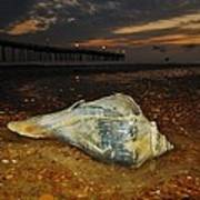 Conch Shell And Pier Predawn 2 10/18 Art Print