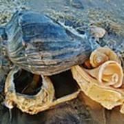 Conch Shells Hatteras 5 10/17 Art Print