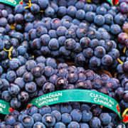Concord Grapes Art Print by Mary  Smyth