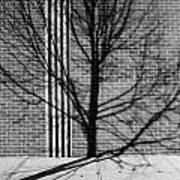 Concrete Tree II Art Print