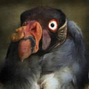 Condor 1 Art Print