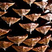 Cone Close Up Art Print