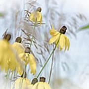 Coneflower And Bee 1  Art Print