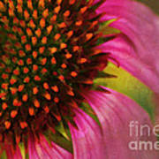 Coneflower Art Print by Darren Fisher