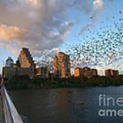Congress Avenue Bats Art Print