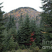 Conifer Country Art Print