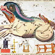 Constellation: Cetus Art Print