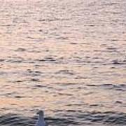 Contemplative Seagull Art Print