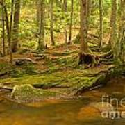 Cook Forest Rocks And Roots Art Print