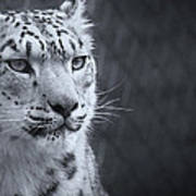 Cool Leopard Art Print