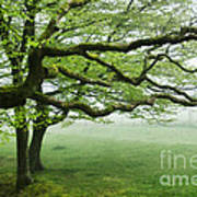 Cool Misty Day At Blackbury Camp Art Print