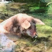 Cool Pig Art Print