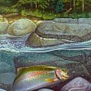 Coolwaters Rainbow Trout Print by Jon Q Wright